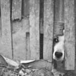 Integra il reato di maltrattamenti anche l'omessa cura dell'animale affetto da diverse patologie (Cass. pen. sez. III, 15/01/2019 n. 22579)